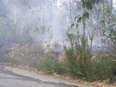Incêndio florestal devasta mato na serra de Rates