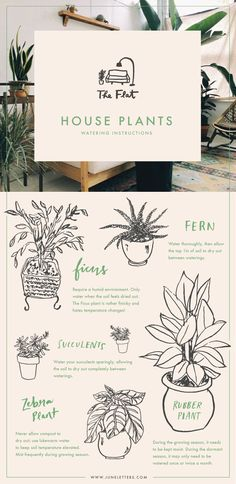 The Flat: Illustrated guide to watering house plants — June Letters Design Blog