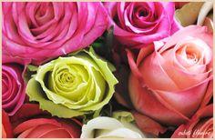 africa-flower.com