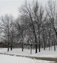 The woods across from the Space Research Building.