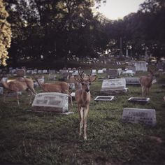 poisonappleprintshop Yesterday's party guests.  #alleghenycemetery