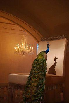 "Peacock | ""Cristal Room Baccarat"" <3"