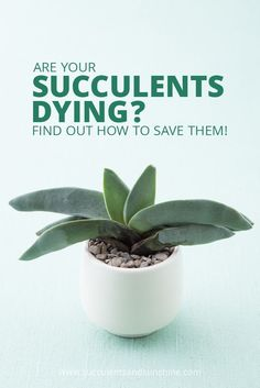 This post is so helpful for diagnosing why your succulent is dying! via @succsandsun