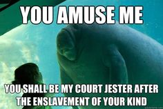 You amuse me You shall be my court jester after the enslavement of your kind  Overlord Manatee