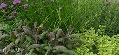 Planning an New Herb Garden - Part 2: Award-winning herb garden from Jekka's Herb Farm at the Chelsea Flower Show.