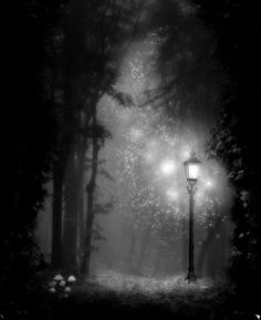 SPOTLIGHT http://susanneleist.blogspot.com A clearing in the woods. A spot of light in the darkness. What lives here? #ASMSG