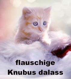 flauschige Knubus dalass ;-) Cats, Animals, Animales, Gatos, Animaux, Animal, Cat, Animais, Kitty