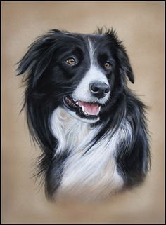 Border Collie by Coral Rose Art, just beautiful
