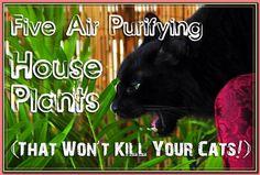 (paid link) Houseplants That Are Safe for Cats and Dogs · African Violet (Saintpaulia ionantha) · Aluminum Plant (Pilea cadieri) · Dwarf Banana Plant ( ... #catsafehouseplants