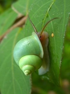 What is this? This obviously isn't just a snail because it's green and it's eyes are on it's face