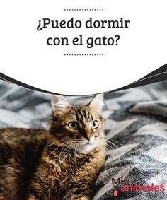 ¿Puedo #dormir con el gato? Antes de que llegue una #mascota nueva a casa nos prometemos que no vamos a #permitir que suba a la cama… pero después llega el invierno y nos da lástima dejarlo solo, por eso aceptamos que nos haga compañía. Muchos se #preguntan si pueden dormir con el #gato y en este artículo responderemos a esta consulta.