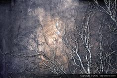 trees and sky Trees, Ocean, Sky, Abstract, Beach, Artwork, Heaven, Summary, Work Of Art