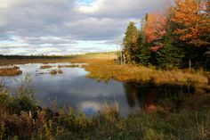 Mirrored Sky ~ Autumn colors and grey clouds reflected in the water near Dover-Foxcroft, Maine.  Photo by Daryne Rockett