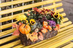 Připadají vám okna bez truhlíků smutná? Proč jim nedat i na podzim šmrnc a nenechat je zářit? Připravili jsme pro vás pár inspirací na to, čím je osázet.