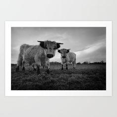 High Park Cow canvas print by rawshutterbug Scottish Highland Cow, Highland Cattle, Scottish Highlands, Cow Canvas, Canvas Prints, Art Prints, Conservation, Wall Tapestry, Habitats