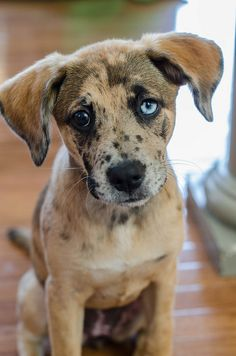 Love this puppy face - I would take him home in a heart beat.