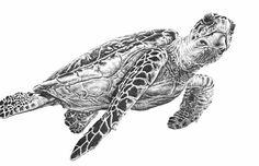 Realistic Sea Turtle