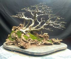 If you intend to grow the bonsai from seeds, remember that you want to set the seeds in a fridge for around a week before planting. Growing a bonsai can … Bonsai Orange Tree, Flowering Bonsai Tree, Bonsai Tree Types, Garden Shrubs, Bonsai Garden, Garden Trees, Outdoor Bonsai Tree, Indoor Bonsai, Bonsai Soil