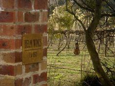 Wallaby in the vineyard - Helm Wines, Murrumbateman, Australia New Zealand Travel, Family Affair, Wineries, Vineyard, Wildlife, Australia, Board, Outdoor Decor, Wine Cellars