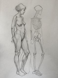 Figure Study - Anatomy Reference by AlbaBG on DeviantArt