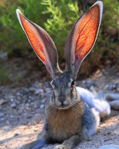 Either my head is shrinking, or my ears are going through a growth spurt.  _____________ #aging #notmyphoto