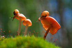 Vadimir Trunov #photography #grass #garden #nature #art