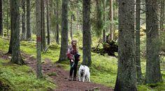 Metsälintu: Pieni metsäretki