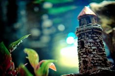 Underwater Tower | Flickr - Photo Sharing! ©ThompCyn Photography - Cynthia Harris http://www.thompcynphotography.com