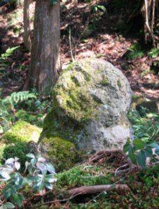 Theravada Buddhism, Cement Mixers, Buddhist Meditation, Plants, Spirit, Plant, Planets
