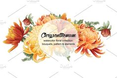 Set of watercolor chrysanthemum by Curly family on @creativemarket