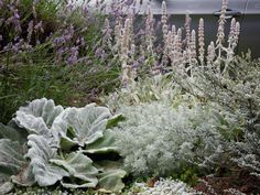Low-Maintenance Plants and Dwarf Shrubs | DIY Dwarf Mondo Grass, Landscape Design, Garden Design, Dwarf Shrubs, Backyard Landscaping, Walkway Garden, Front Walkway, Backyard Plants, Ground Cover Plants