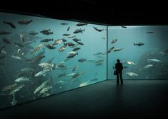 Atlantic Sea-Park, an aquarium in Ålesund, Norway by Lars Harald Sørebø