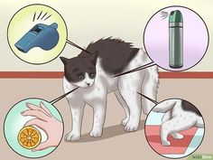 How to Train a Cat to Stop Doing Almost Anything: 9 Steps