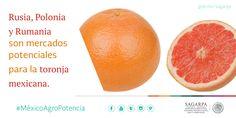 Rusia, Polonia y Rumania son mercados potenciales para la toronja mexicana. SAGARPA SAGARPAMX #MéxicoAgroPotencia