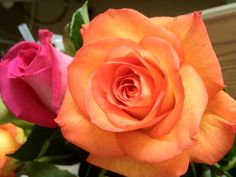 A shot of an orange rose. Red And White Roses, Orange Roses, Garden, Beautiful Flowers, Art, Pretty, Plants, Flowers, Squares
