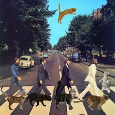 Album covers improved by cats: Tabby Road | Intertubes