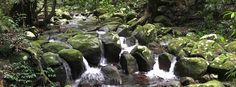 Water,+Water+Everywhere+–+Coomera+Circuit,+Binna+Burra,+Lamington+National+Park