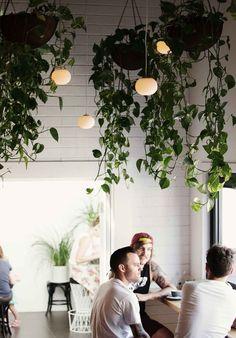 Indoor Greenery//