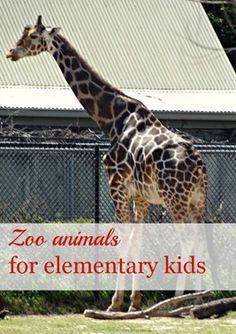 Zoo animals for Kids - Adventures in Mommydom