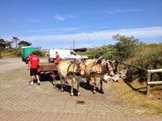 Camping stortemelk, bagage vervoer op Vlieland