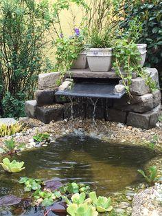 The garden pond 8