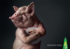 Animals Photo Manipulation