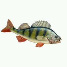 Nur wenn du mindestens 14 Punkte in diesem Quiz schaffst, kennst du dich wirklich mit Fischen aus