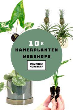 Ik maakte een lijstje met 10 toffe kamerplanten webshops waar jij je plantencollectie kan uitbreiden. Sjouwen met grote kamerplanten is verleden tijd! #kamerplanten #webshops #planten #plantcollectie #plants #urbanjungle Herbs, Flowers, Plants, Urban, House, Ideas, Seeds, Home, Herb