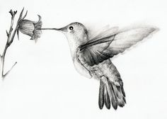 pencil+drawings+of+hummingbirds | Pencil Drawings Of Hummingbirds Hummingbird by chatroux