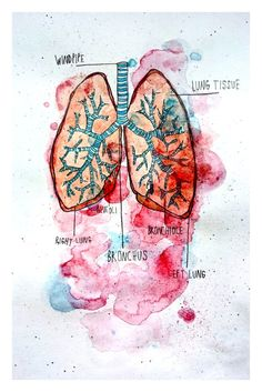 This is a print of one of my original watercolor paintings.  Its a diagram of lungs.  This is a high quality 8.5 x 5.5 matte print on 100%