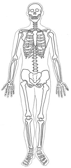 Line Drawing Human Body : Images about body crafts pre on pinterest
