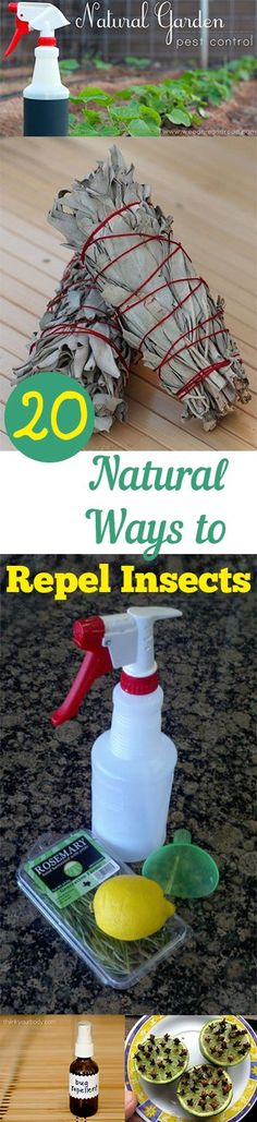 How to Repel Insects Naturally- all natural pesticides, bug repellent and more...