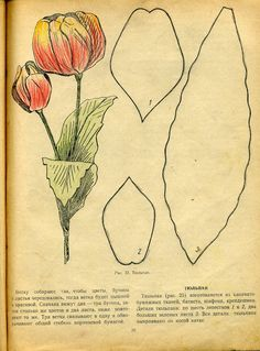 Tulip. This has multiple petal design and templates