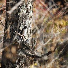 【yasu_hassy】さんのInstagramをピンしています。 《#photo#nature#nikon#写真好きな人と繋がりたい#写真撮ってる人と繋がりたい#japan#Lovers_Nippon#森#forest #tree #trees #野鳥#写真 #morning #mountain #mountains #naturelovers #景色 #自然 #bird #birds #東京カメラ部 #wild #wildlife #outdoors #nippon》